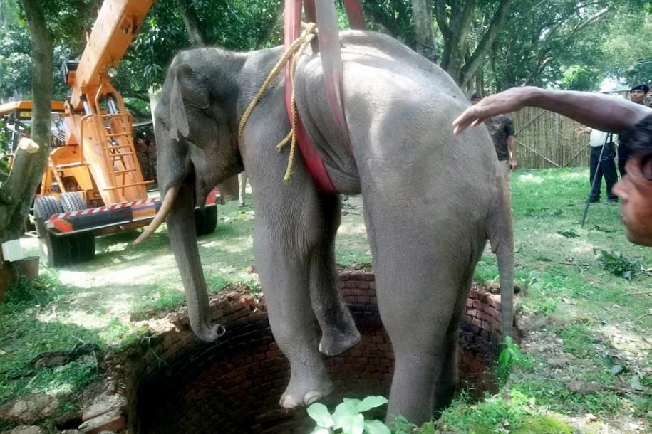 Tizennégyórás mentőakcióval emeltek ki egy elefántot egy kútból Indiában