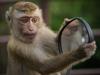 Tükrös majom