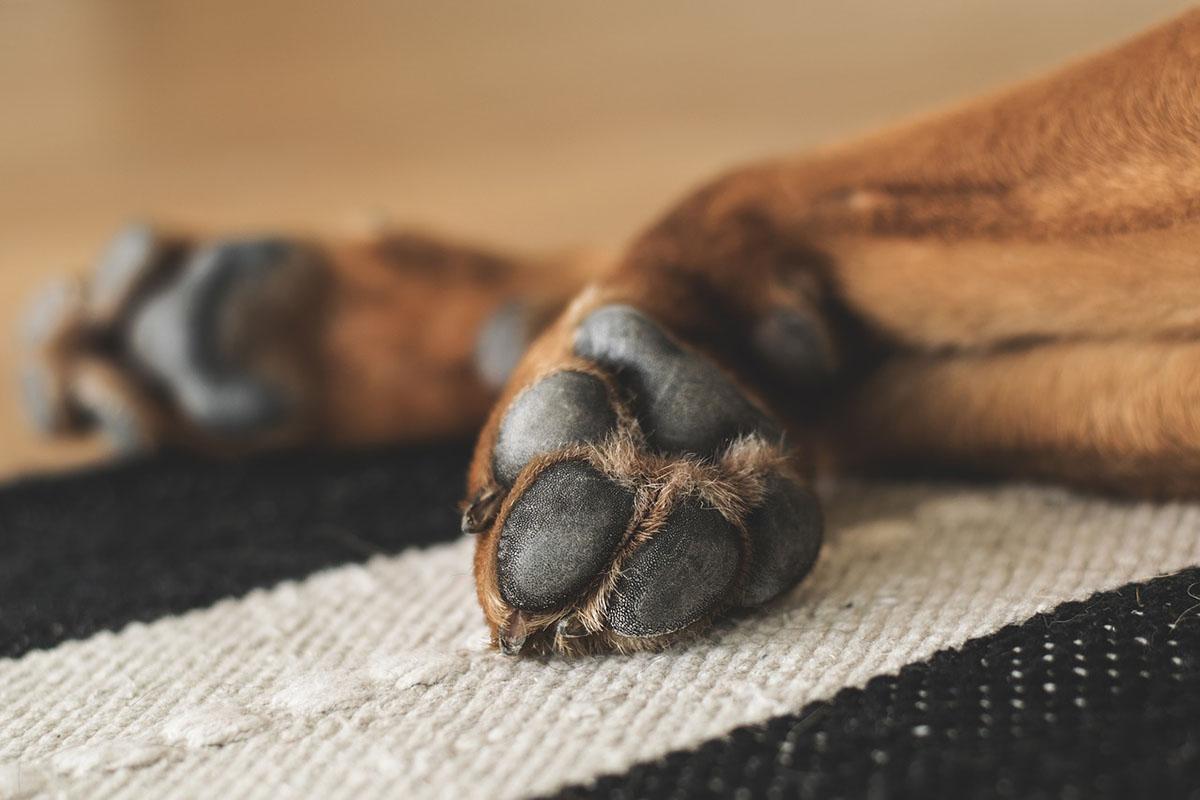 Veszett kutyát találtak Románia magyar határ menti területén