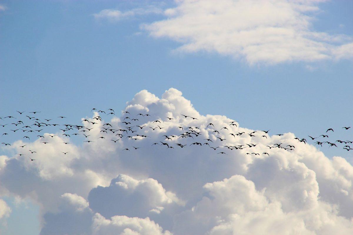 Dömping: ötvenezer madár állomásozott a kardoskúti Fehér-tónál