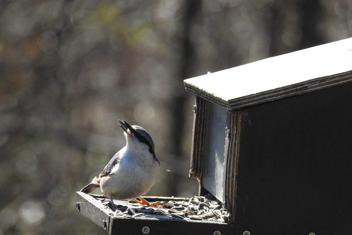 Enyhe a tél, kevesebb madár látogatja az etetőket