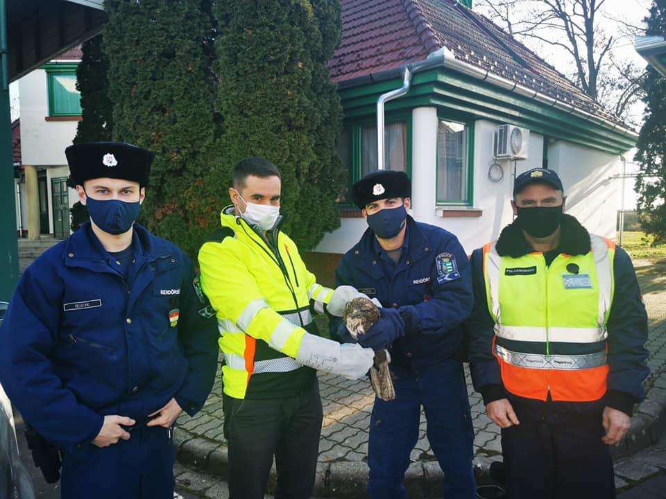 Madarat mentettek a Battonya Határrendészeti Kirendeltség rendőrei