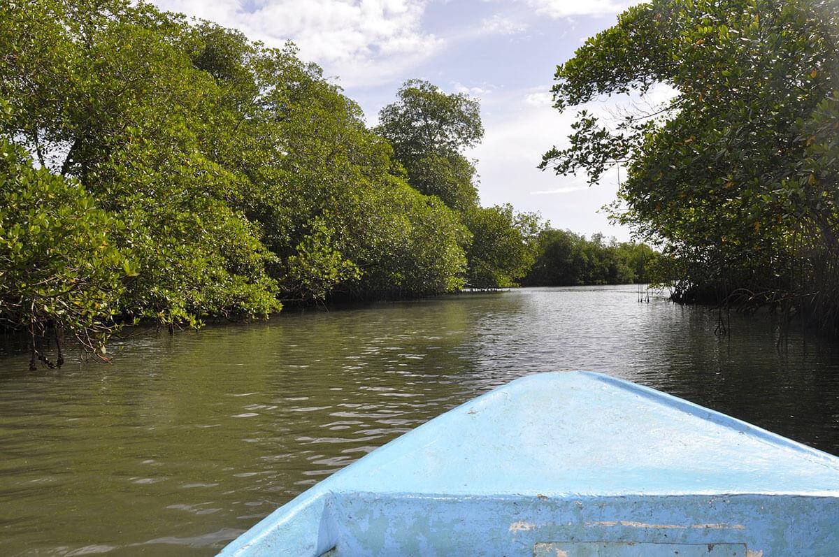 Súlyosan veszélyezteti a mangrove erdőket a folyókból érkező műanyaghulladék