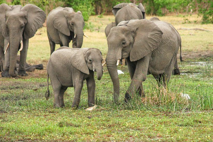 elefántokat, Állatkerti