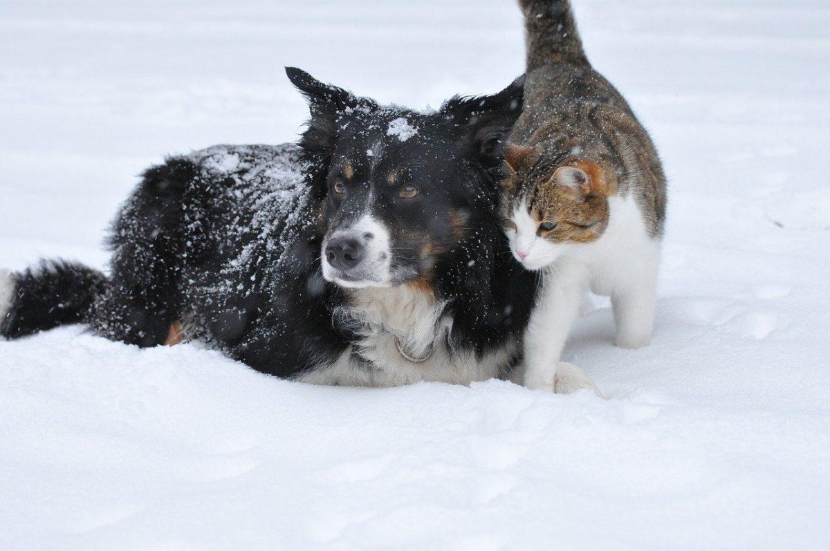 Az állatokra is fokozottan kell figyelni a hidegben