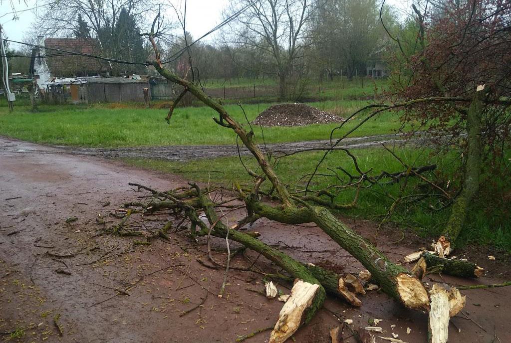 Egy fa ága szakadt villanyvezetékre Gyulán