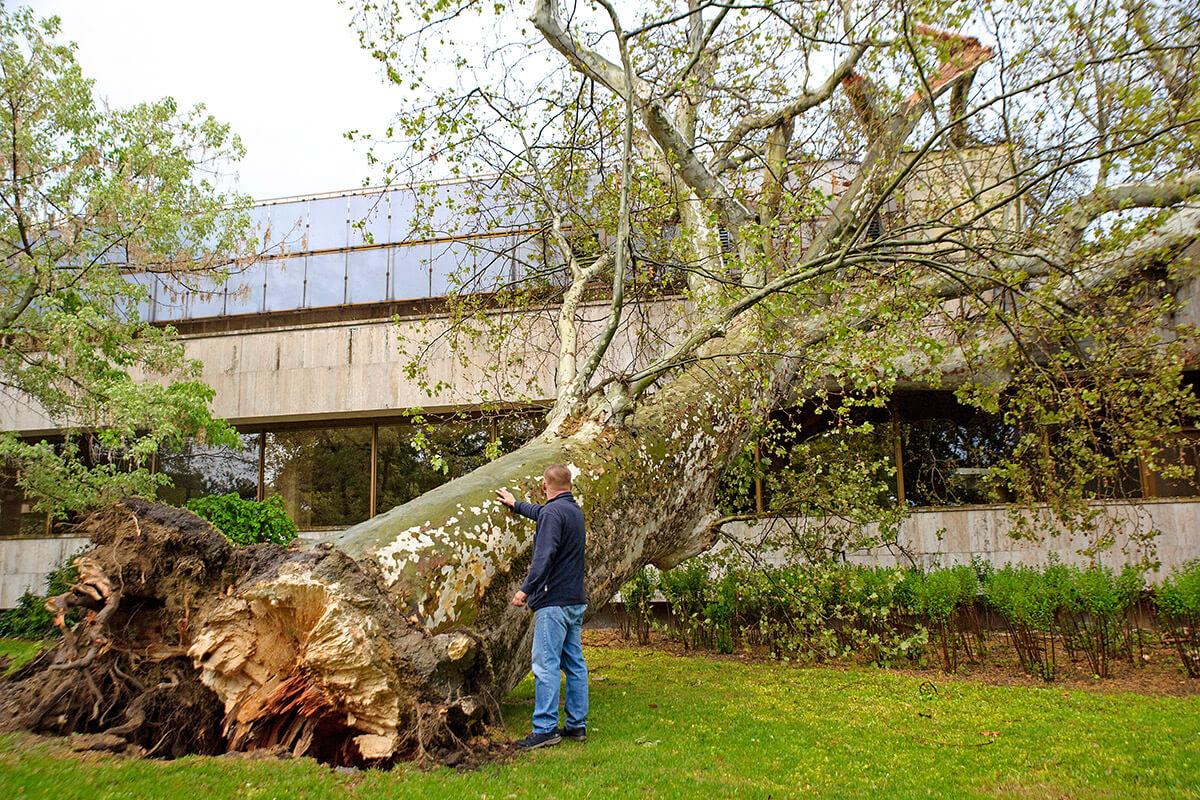 Meteorológus: extrém szélsebességű viharokat okoz a klímaváltozás Magyarországon