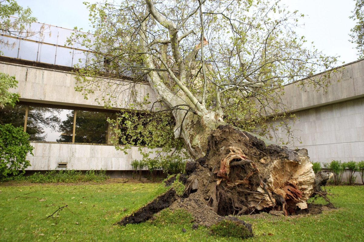 OKF: csaknem kétszáz esethez riasztották a tűzoltókat a vihar miatt