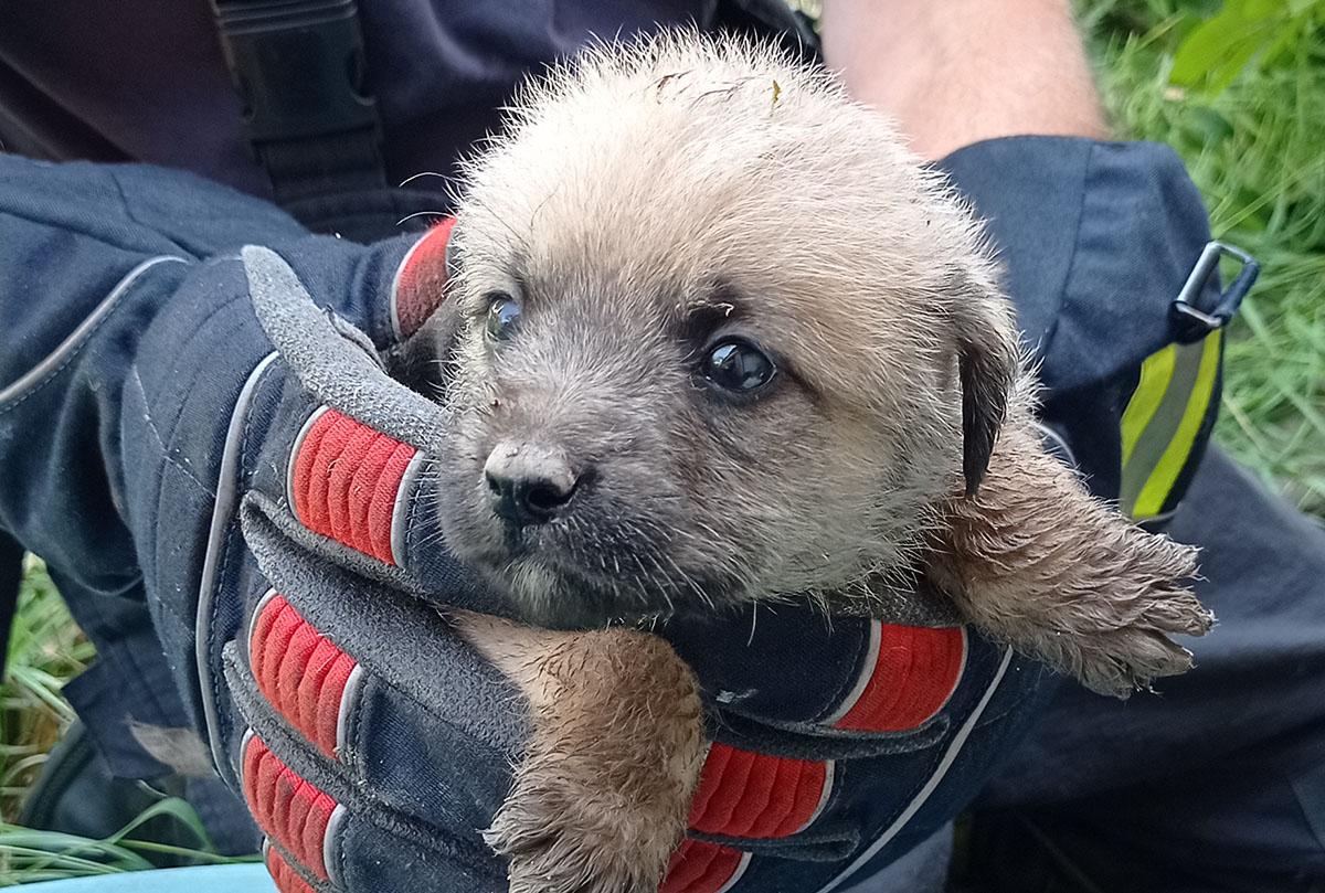 Kutyák kerültek szorult helyzetbe Békésben
