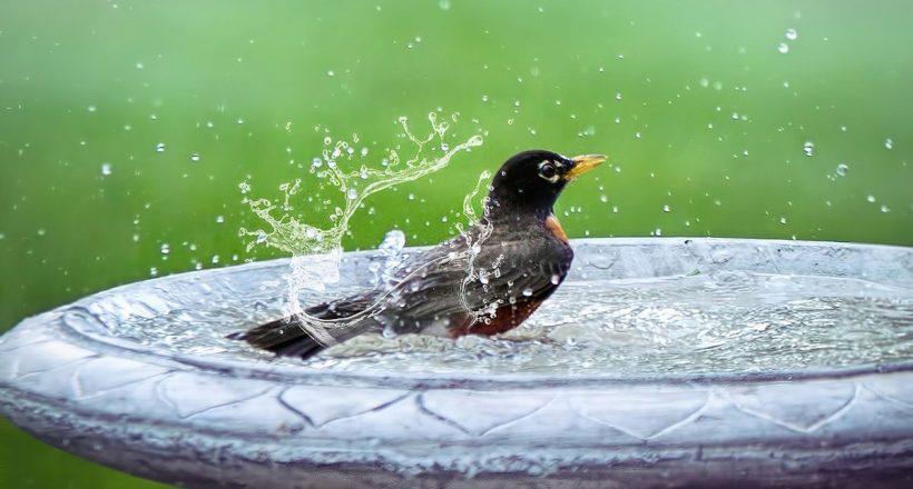 nyár, meleg, hőség, madár, kánikula, időjárás, meleg