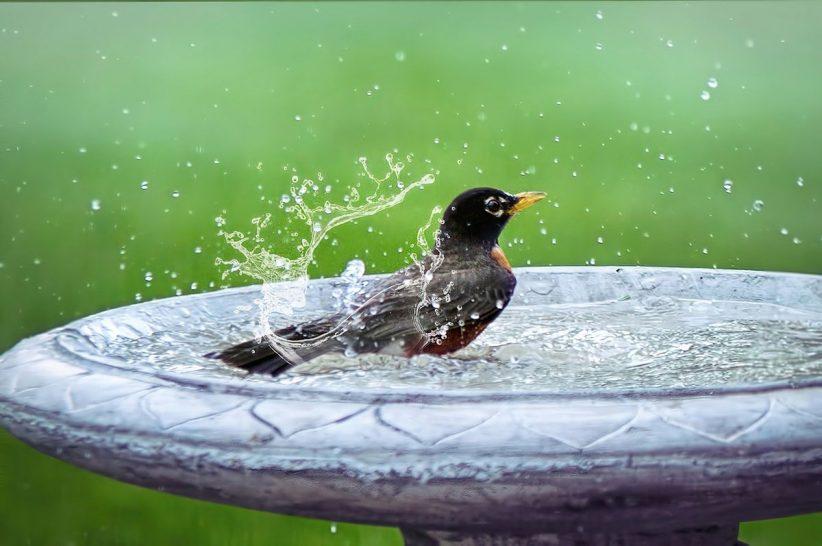 35 fokot, nyár, meleg, hőség, madár, kánikula, időjárás, meleg