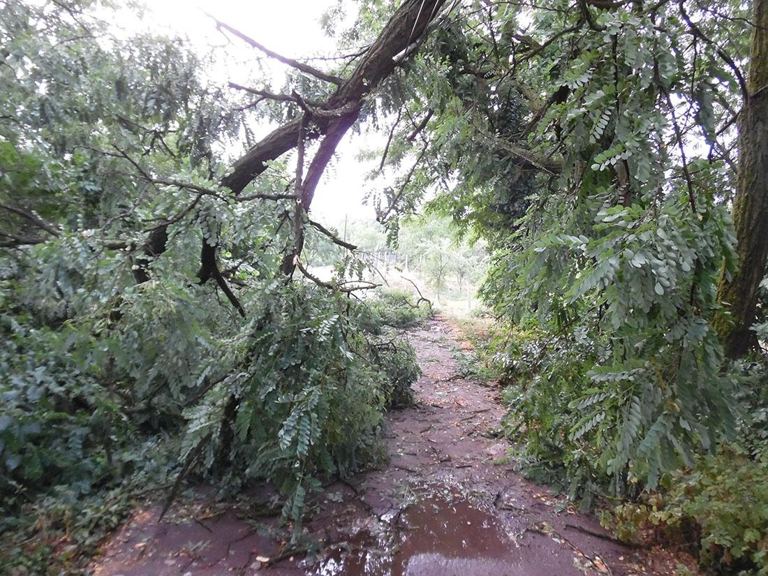 vihar Békés megyében