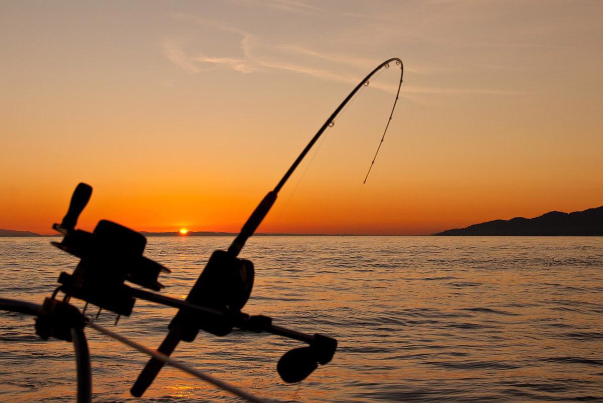 A GVH horgászati nagykereskedő ellen indított vizsgálatot