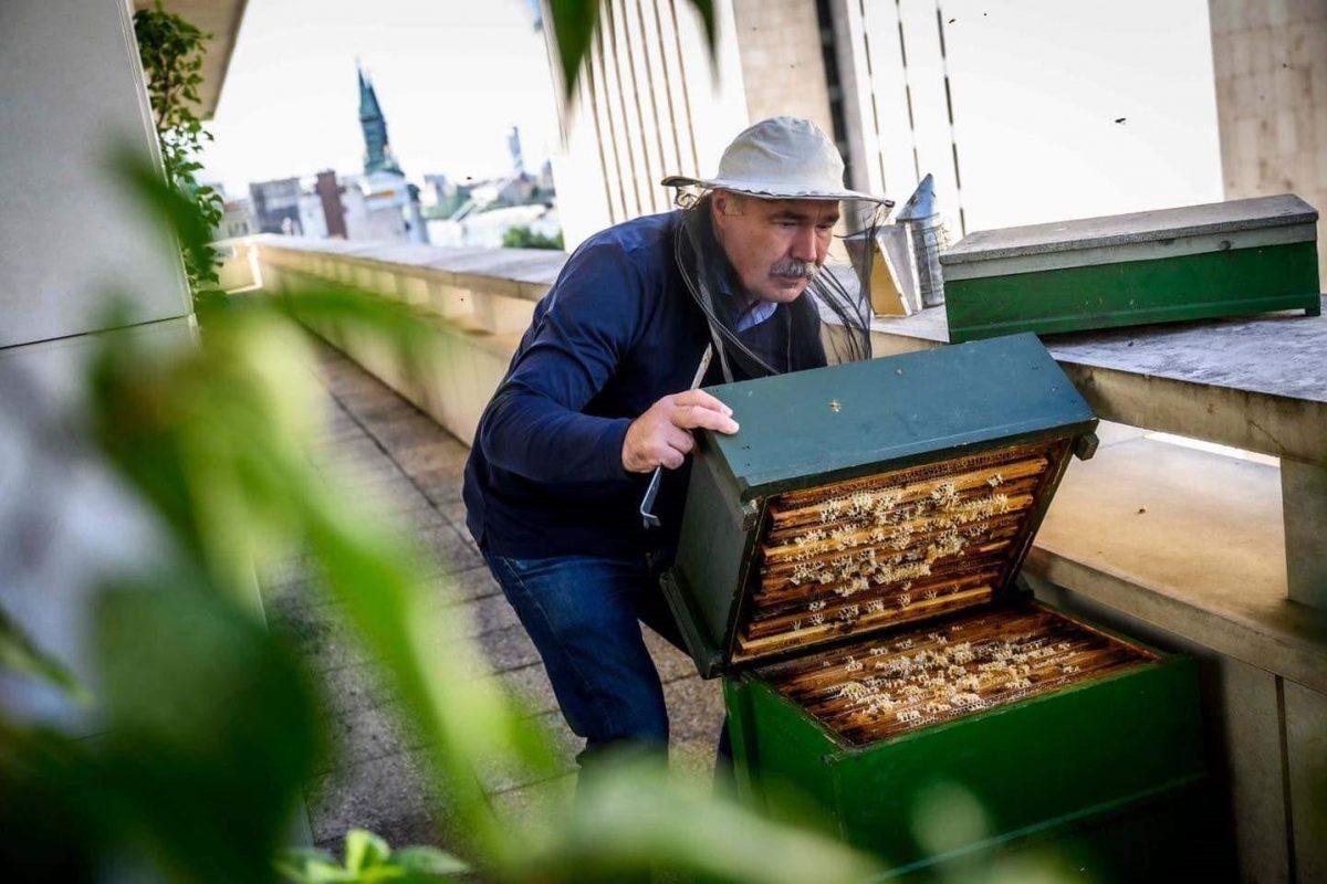 Visszatértek a méhcsaládok az Agrárminisztérium erkélyére