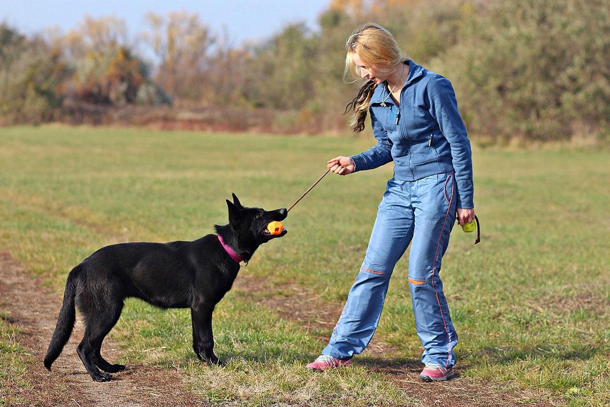 Keresőmunkára kiképezhető kutyákat vásárol a NAV