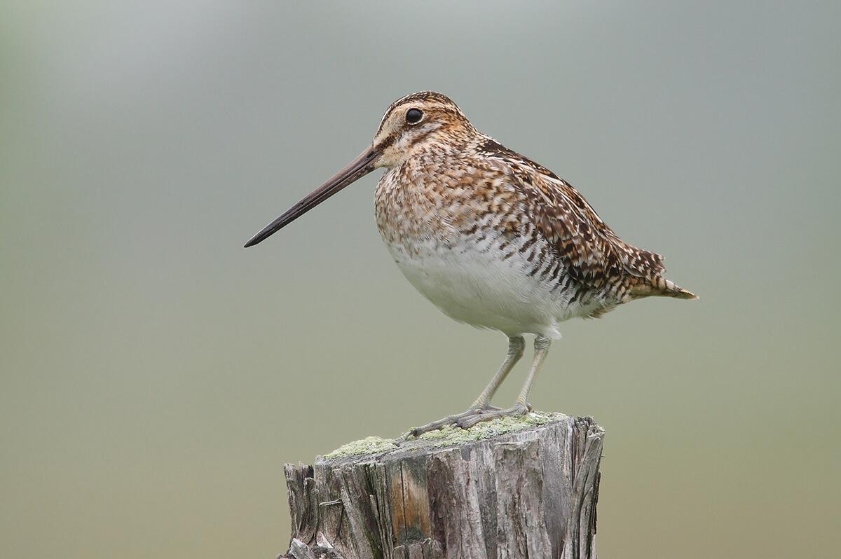 Eltűnhet minden ötödik európai madárfaj